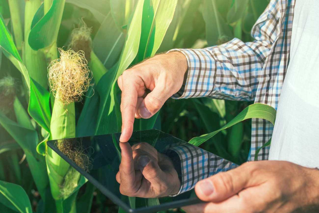 مزایای کشاورزی دیجیتال