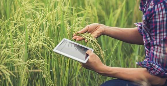 کشاورزی دقیق